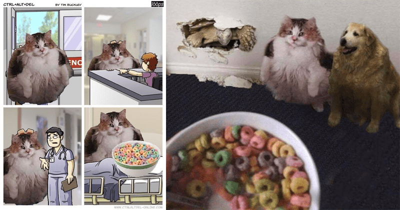 cats wanting fruit loops memes