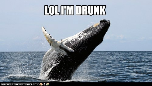 splashing humpback whale drunk lol jumping - 6670102528
