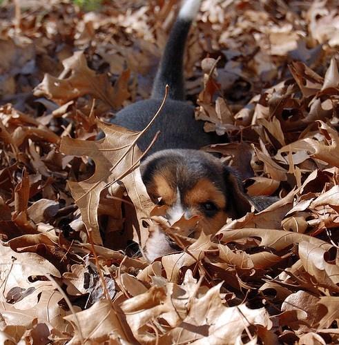 its-sundog