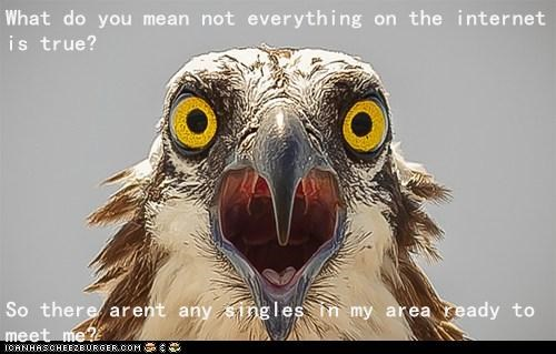 eagle not true internet lies ads surprise singles spam - 6670246656