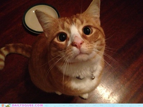 cat reader squee pet begging Puss in Boots food squee delightful insurance - 6670343936