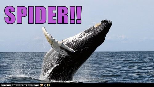 humpback whale spider whale scared jumping - 6671141120
