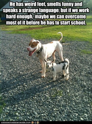 dogs,baby,school,kids,goats,pitbull,weird