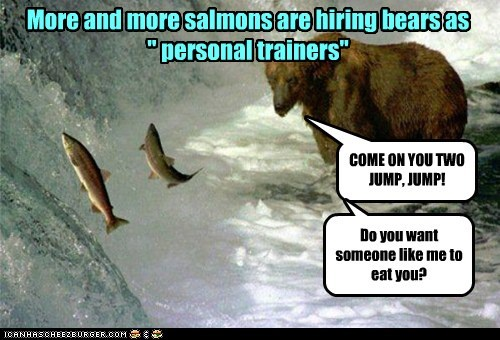 "More and more salmons are hiring bears as "" personal trainers"" COME ON YOU TWO JUMP, JUMP! Do you want someone like me to eat you?"