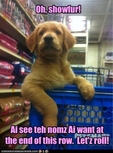 dogs,puppy,shopping cart,chauffeur,grocery store