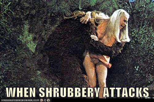 WHEN SHRUBBERY ATTACKS