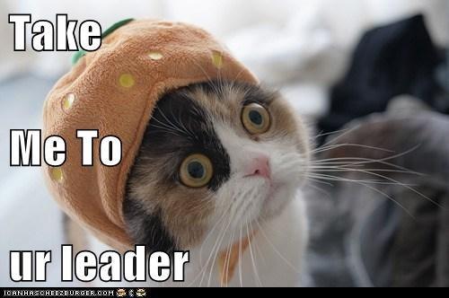 Cheezburger Image 6671577344