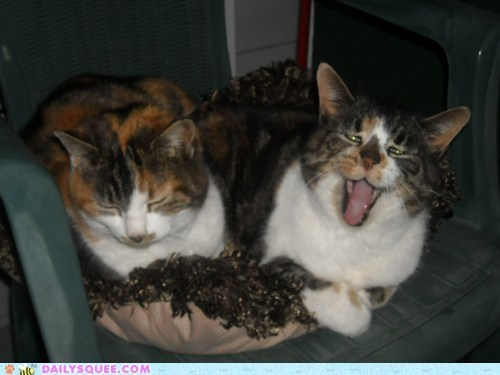 yawn reader squee Cats squee - 6671700224