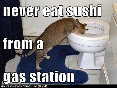 Never Eat Sushi From A Gas Station Lolcats Lol Cat Memes