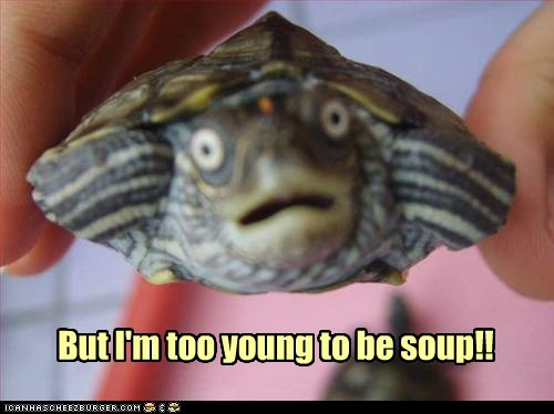 scared,soup,turtle,too young,aaaaaaaa