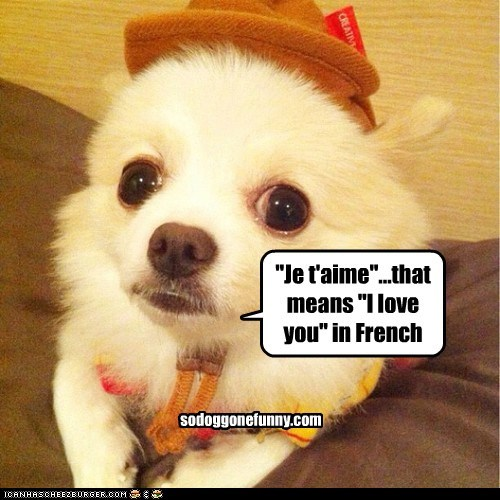 """Je t'aime""...that means ""I love you"" in French sodoggonefunny.com"