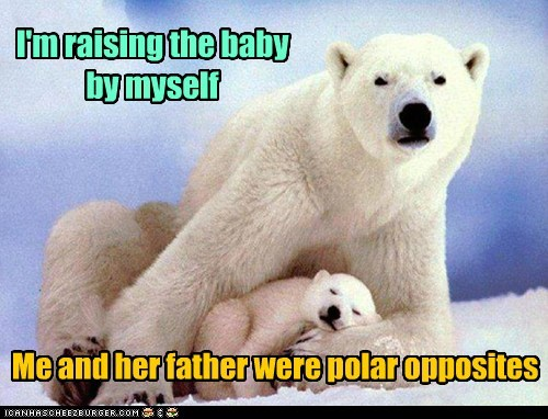 baby,pun,raising,polar bear,single parent,opposites,Father