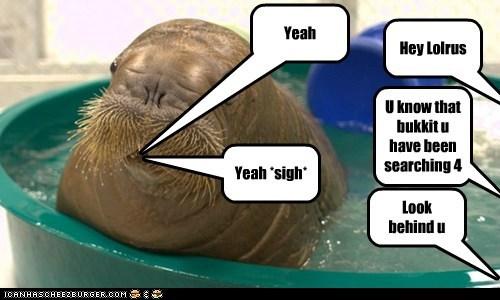 Hey Lolrus Yeah *sigh* U know that bukkit u have been searching 4 Yeah Look behind u
