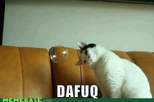 Cats dafuq cats tho - 6672891904