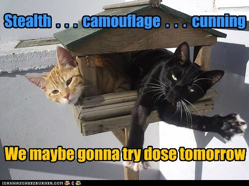 camouflage cunning stealth Cats captions hunt