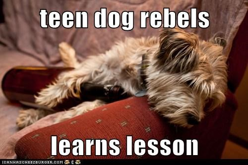 teen dog rebels  learns lesson