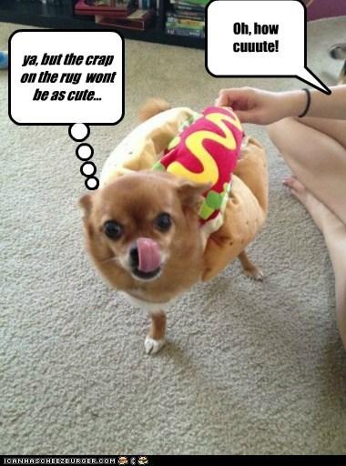 Cheezburger Image 6673769984