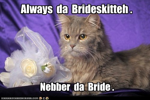 bride bridesmaid wedding marriage Cats captions - 6674455552