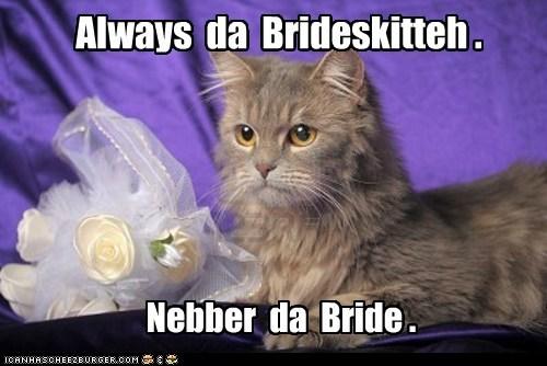 bride bridesmaid wedding marriage Cats captions - 6674455552