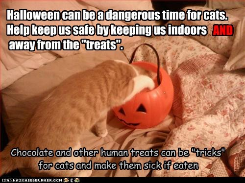 """Halloween can be a dangerous time for cats. Help keep us safe by keeping us indoors away from the """"treats"""". Chocolate and other human treats can be """"tricks"""" for cats and make them sick if eaten AND"""