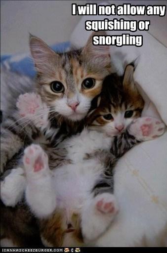 George mine captions squish Cats - 6674676224