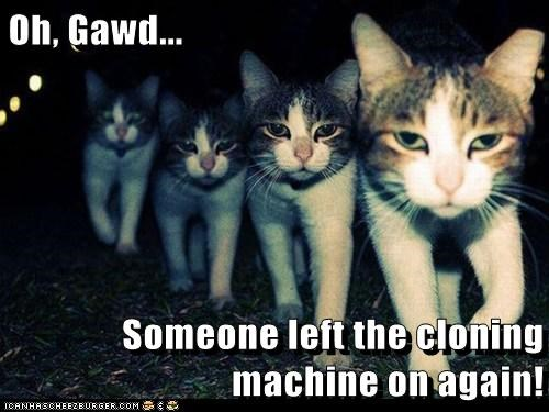 clone,accident,captions,sci fi,Cats,machine