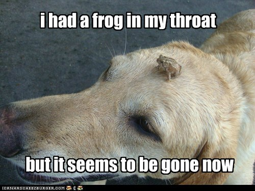i had a frog in my throat but it seems to be gone now