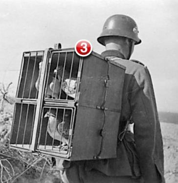 pigeons carrier pigeons messages notification iphone - 6674976256