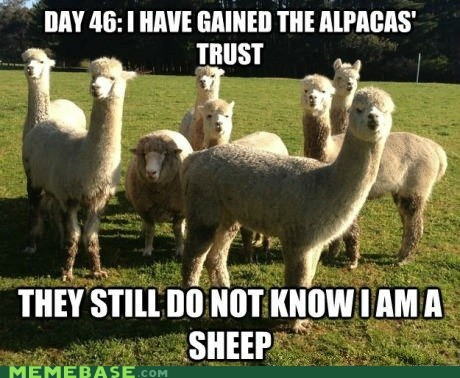 sheep,llama,alpaca,day whatever,trust