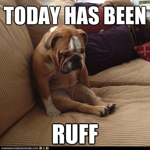 dogs,Sad,mondays,puns,ruff,rough,sitting,human-like,depressed