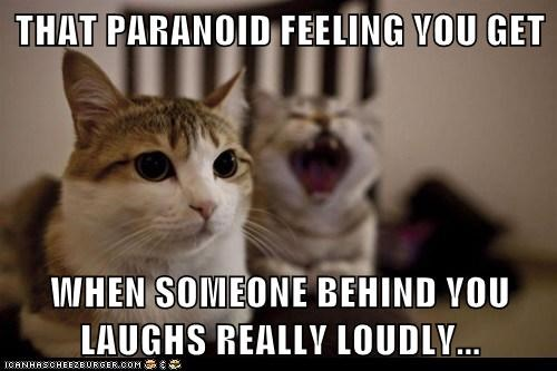 paranoid Awkward captions laugh Cats - 6675315712