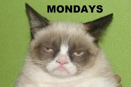 Cats grumpy mondays tard Grumpy Cat captions - 6675380736