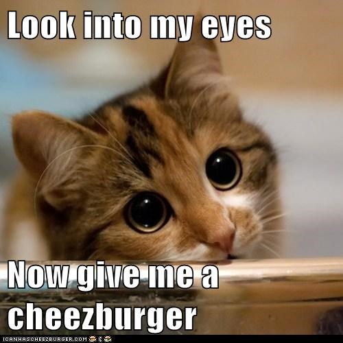 Cheezburger Image 6675603712