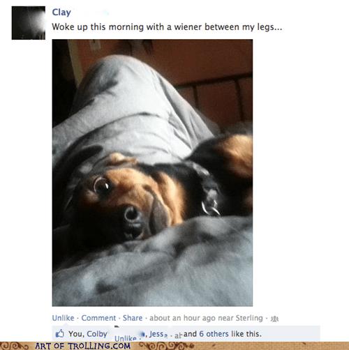 facebook wiener that sounds naughty - 6675880960