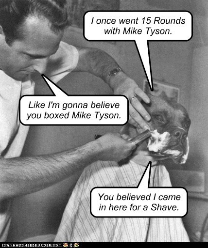 shave,barber,boxer,dogs