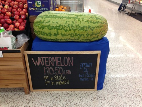 melon,watermelon,fruit,record,huge