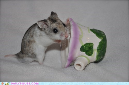 reader squee,squee,hamster,chinese,tea cup