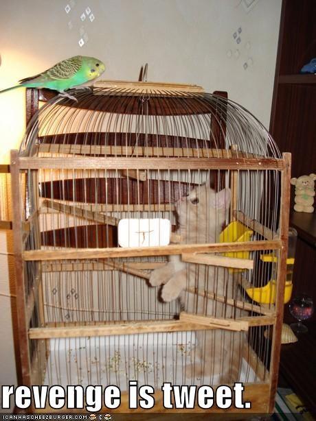 cage,lolbirds,lolcats,parakeet,revenge,tweet