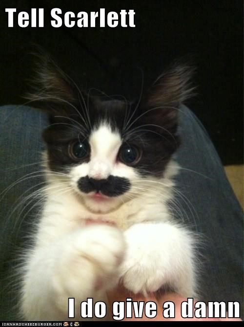 gone with the wind scarlett ohara scarlette mustache Movie reference Cats captions - 6676946944
