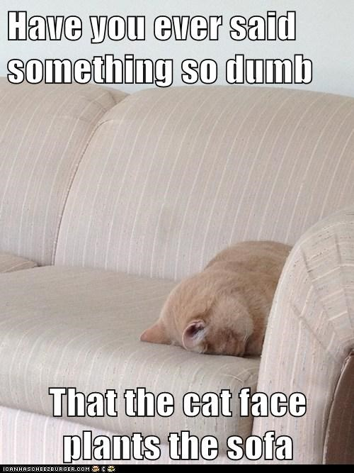 couch facepalm captions dumb sofa Cats faceplant - 6676999168