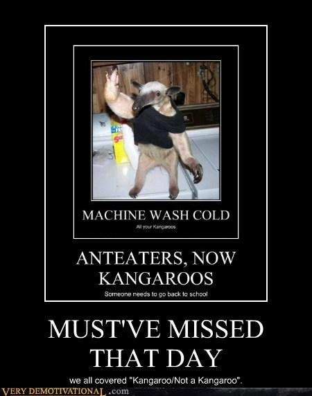 kangaroo anteater school learn - 6677622784