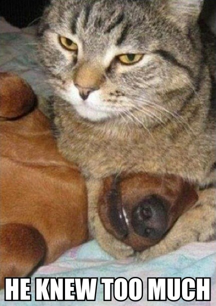 Cats dogs kill murder informant captions - 6677625856