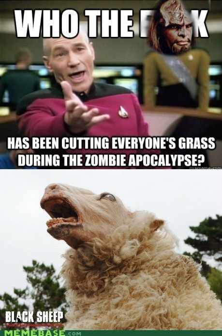 sheep,zombie,apocalypse,grass,black sheep,picard