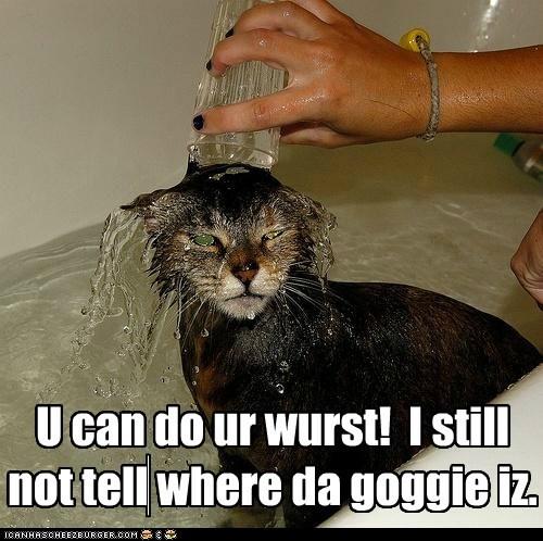 U can do ur wurst! I still not tell where da goggie iz.