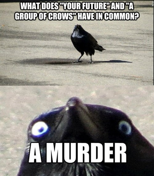crows murders jokes creepy scary multipanel captions - 6677798912