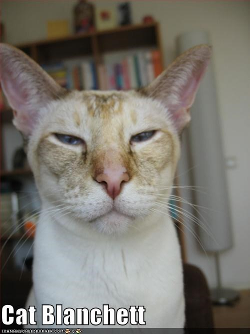 cat blanchett cate blanchett lolcats - 667796224