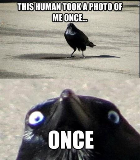 human crow once insanity - 6677988096