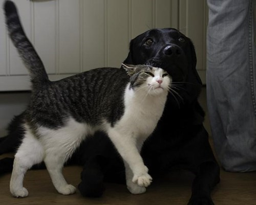 dogs cat kittehs r owr friends stroke cuddles friends - 6678051584