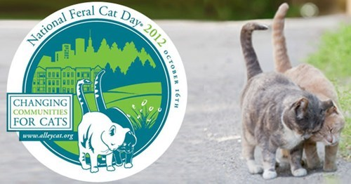 national feral cat day feral cats Cats holidays good causes