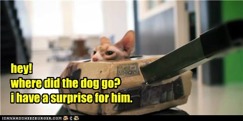 dogs,attack,captions,surprise,tank,Cats